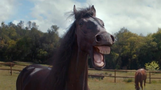 pub-volswagen-chevaux